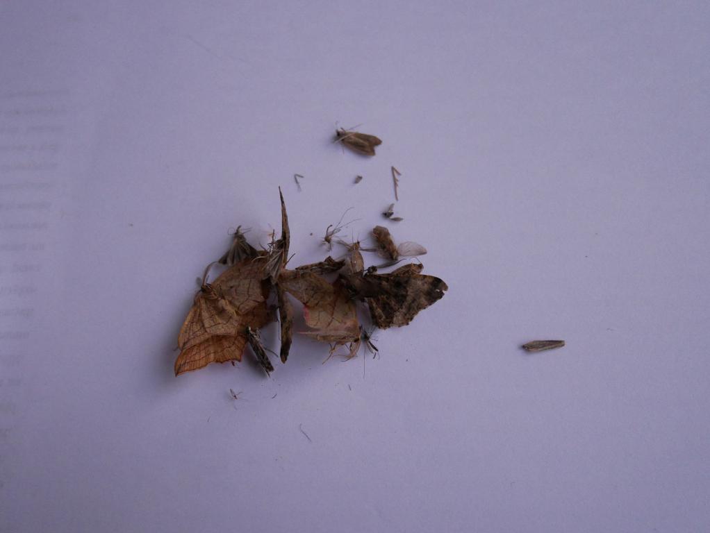 Recenzja lampki - pułapki na komary - owady wysypane z pułapki za drugim razem